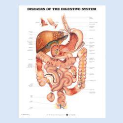 """Diagramm """"Erkrankungen des Verdauungssystems"""""""