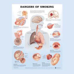 """Diagramm """"Die Gefahren des Rauchens"""""""