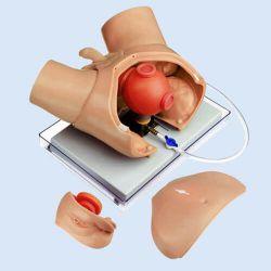 Urologisches Übungsphantom für endoskopische Operationen
