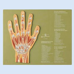 Gelenkschnitt Hand