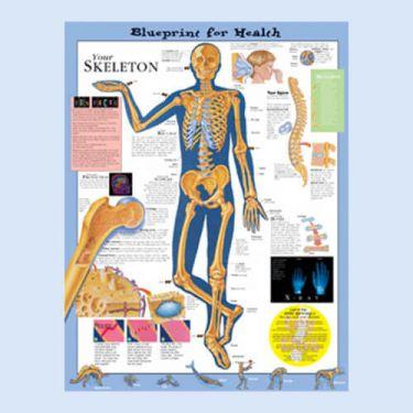 """Diagramm """"Die Gesundheitsverordnung - Dein Skelett"""""""