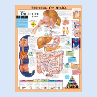 """Diagramm """"Die Gesundheitsverordnung - Ihr Magen-Darm System"""""""