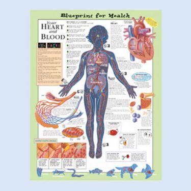 """Diagramm """"Die Gesundheitsverordnung - Dein Herz und Blut"""""""
