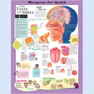 """Diagramm """"Die Gesundheitsverordnung - Geschmack und Geruch"""""""
